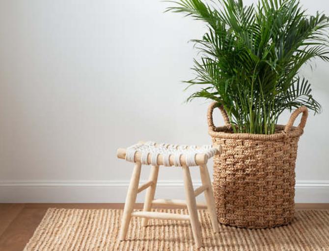 Hilton Head Furniture Store - Neutral Rugs  Dash & Albert